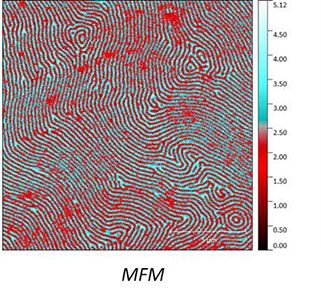 AFSEM MFM image obtained on a multilayered magnetic sample. (Figure 2) MFM Phase contrast revealing the different magnetic domains.